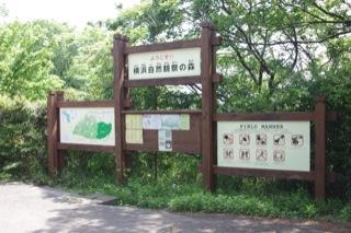 初めて見たハンミョウ - 横浜自然観察の森