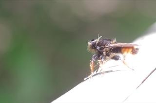 個性豊かな昆虫たち - 狭山丘陵の林縁散策