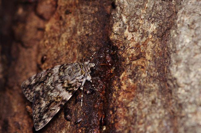 狭山丘陵の7月前半の蛾や蝶