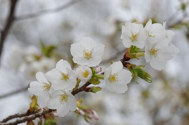 http://toma.ootaki.info/2016/04/01/001.JPG