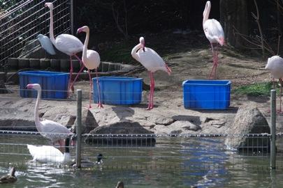智光山公園の動物園で野鳥観察
