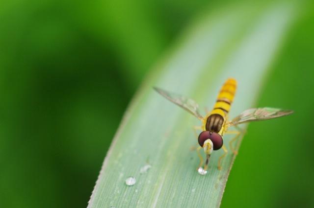 入間川散策 - マクロレンズから昆虫を探します