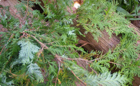 西川杉の森で見つけた暗号